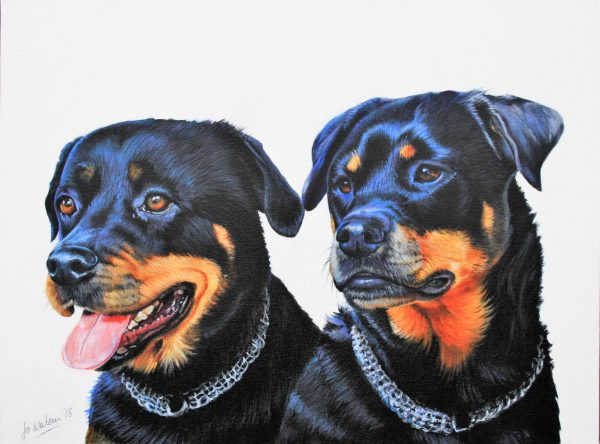 Summer & Mia the Rottweilers...(commission)
